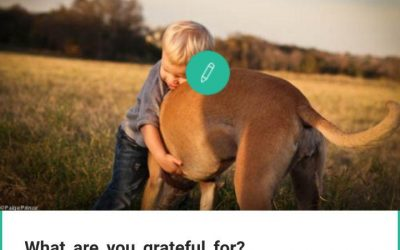 Best Gratitude Journal Apps